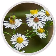Green Wasp And Daisies Round Beach Towel