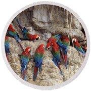 Green-winged Macaw Round Beach Towel