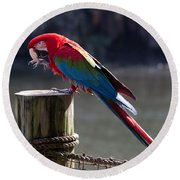 Green-winged Macaw Round Beach Towel