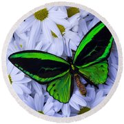 Green Wings In The Mums Round Beach Towel