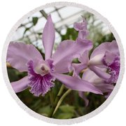 Greenhouse Ruffly Orchids Round Beach Towel