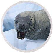 Greetings From Antarctica.. Round Beach Towel