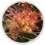 Grevillea  Superb Round Beach Towel