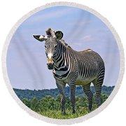 Grevy's Zebra Round Beach Towel