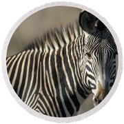 Grevys Zebra Standing In Plains Kenya Round Beach Towel