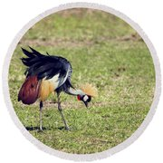 Grey Crowned Crane. The National Bird Of Uganda Round Beach Towel