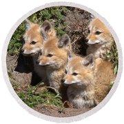 Grey Foxes At Den Round Beach Towel