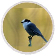 Grey Jay  Round Beach Towel