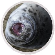 Grey Seal Pup Yawning Round Beach Towel