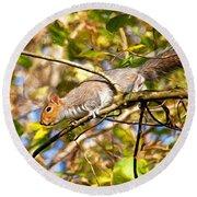 Grey Squirrel - Impressions Round Beach Towel