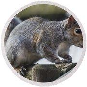 Grey Squirrel Round Beach Towel
