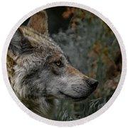 Grey Wolf Profile 3 Round Beach Towel