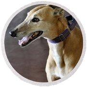 Greyhound Dog Round Beach Towel