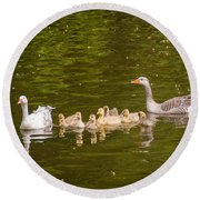 Greylag Goose Family Round Beach Towel
