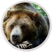 Grizzly Bear At Rest In Colorado Wildneress Round Beach Towel