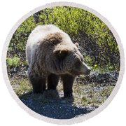 Grizzly Bear Round Beach Towel