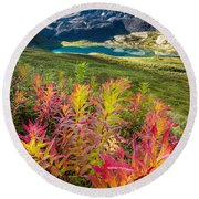 Grizzly Bear Fireweed Round Beach Towel by Tim Newton