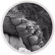 Grizzly Bear Paw Black And White Round Beach Towel