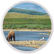 Grizzly Bear Stalking A Gull In The Moraine River In Katmai National Preserve-alaska Round Beach Towel