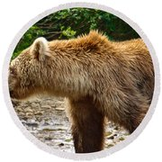 Grizzly Bear Very Close In Moraine River In Katmai National Preserve-ak Round Beach Towel
