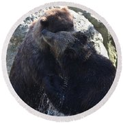 Grizzly Bears Fighting Round Beach Towel