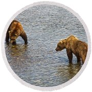 Grizzly Bears Looking For Salmon In Moraine River In Katmai Np-ak Round Beach Towel