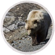 Grizzly By The Road Round Beach Towel