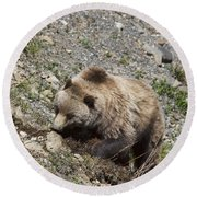 Grizzly Digging Round Beach Towel