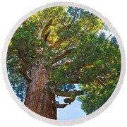 Grizzly Giant Sequoia Top In Mariposa Grove In Yosemite National Park-california    Round Beach Towel