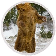 Grizzly Standing Round Beach Towel