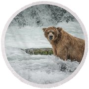 Grizzly Stare Round Beach Towel