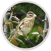 Grosbeak Round Beach Towel