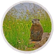 Groundhog At Point Amour In Labrador Round Beach Towel