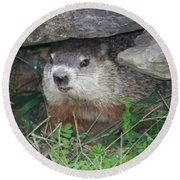 Groundhog Hiding In His Cave Round Beach Towel