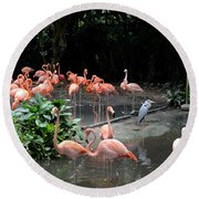 Group Of Flamingos And Lone Heron In Water Round Beach Towel