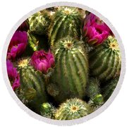 Grouping Of Cactus With Pink Flowers Round Beach Towel
