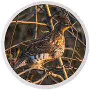 Grouse In A Tree Round Beach Towel