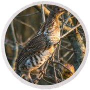 Grouse In An Apple Tree Round Beach Towel