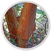 Growing Through The Fence Round Beach Towel
