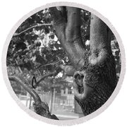 Growth On The Survivor Tree In Black And White Round Beach Towel