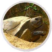 Florida Gopher Tortoise And Home Round Beach Towel