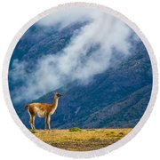 Guanaco Mother And Child Round Beach Towel