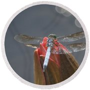 Guard Dragonfly... Round Beach Towel