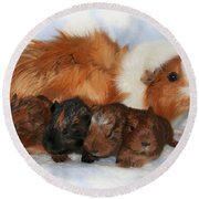 Guinea Pig Family Round Beach Towel