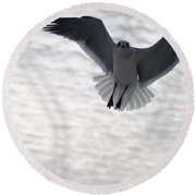 Gull From The Heavens Round Beach Towel
