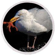 Gull With Starfish Round Beach Towel