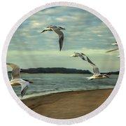 Gulls In Flight Round Beach Towel