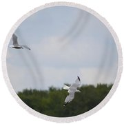 Gulls In Flight Round Beach Towel