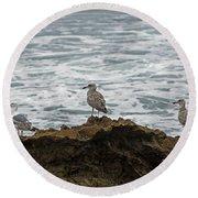 Gulls Podium  Round Beach Towel