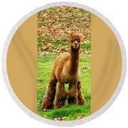 Hairy Brown Gumby Aka Brown Alpaca Round Beach Towel